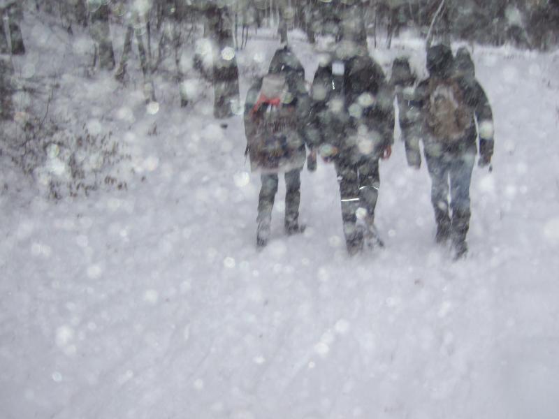 Schneefall, von den Bäumen